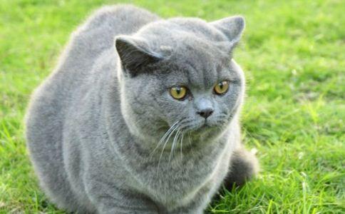 最关心的问题一定是怎样去选择一只健康的小猫了.下面就给大家说说