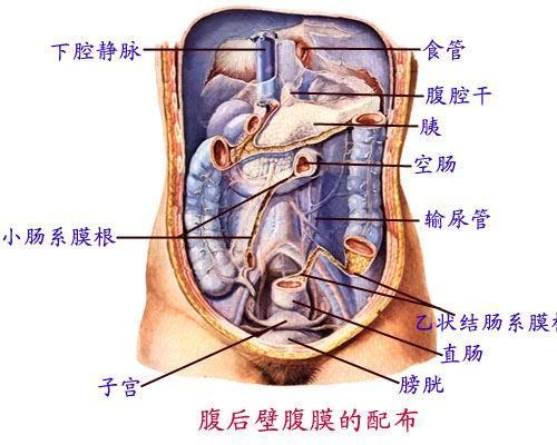 人体 南召/医学人体消化系统解剖图(12)_医学图库_99健...
